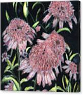 Echinacea Pinks Canvas Print