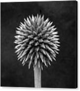 Echinops Monochrome Canvas Print