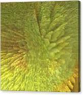 Eclosion  Matutina Canvas Print
