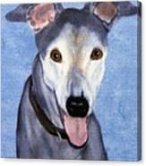 Eddie - Greyhound Canvas Print