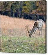 Edge Of The Forest Canvas Print