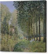 Edge Of The Wood Canvas Print