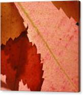 Edgy Leaves Canvas Print