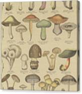Edible And Poisonous Mushrooms Canvas Print