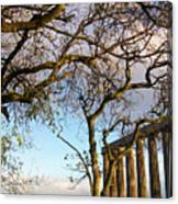 Edinburgh - Caption Hill Trees Canvas Print