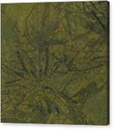 Edition 1 Kelp Canvas Print