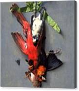 Eduard Quitton  Still Life With Green Ribbon, Fly, And Four American Birds Canvas Print