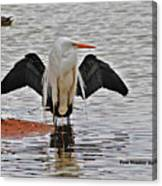 Egret And Cormorant Wings Canvas Print
