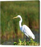 Egret At The River Canvas Print
