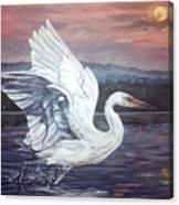 Egret Canvas Print