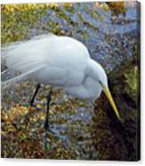 Egret Fishing Canvas Print