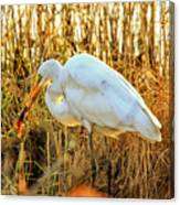 Egret Fishing In Sunset At Forsythe National Wildlife Refuge Canvas Print