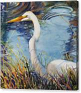 Egret In Cameron Marsh Canvas Print