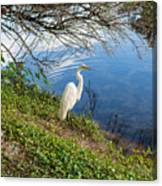 Egret In Florida Color Canvas Print