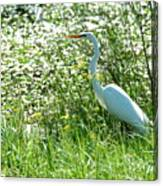 Egret In Flowers Canvas Print