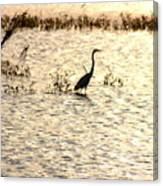 Egret In Sunset Water Canvas Print