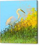 Egret In The Lake Shallows Canvas Print