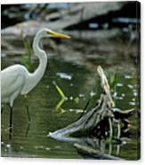 Egret In The Swamp Canvas Print