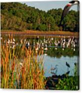 Egret Lake Canvas Print