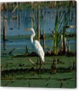 Egret Of The Marsh Canvas Print
