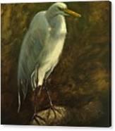 Egret On Branch Canvas Print