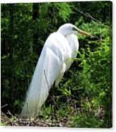 Egret On Guard Canvas Print