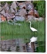 Egret On The Danvers River Canvas Print