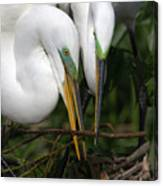 Egret Pair Canvas Print
