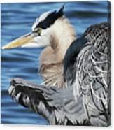 Egret Stretching Canvas Print