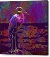 Egret White Bird Beach Wildlife  Canvas Print