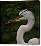 Egret With Branch Canvas Print