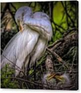 Egrets - 3399 Canvas Print