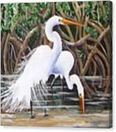 Egrets And Mangroves Canvas Print