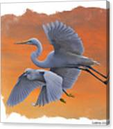Egrets Great And Snowy Canvas Print