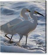 Egrets In The Shallows Canvas Print