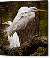 Egrets On A Branch Canvas Print