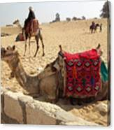 Egypt - Camel Getting Ready For The Ride Canvas Print