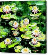 Eight #waterlilies Canvas Print