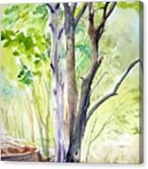 Ekant Park 10 Canvas Print