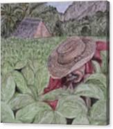 El Campo De Tabaco Canvas Print