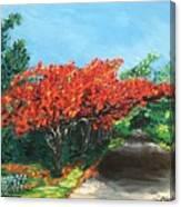 El Flamboyan En Mi Camino Canvas Print