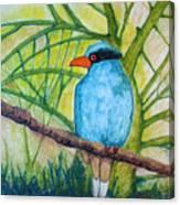 El Pajaro Del Agua Azul  Canvas Print