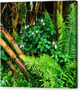 El Yunque National Forest Ferns Impatiens Bamboo Canvas Print