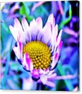 Electric Daisy Canvas Print