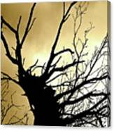 Electric Tree Black And Gold Canvas Print