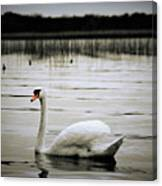 Elegance In Motion Canvas Print