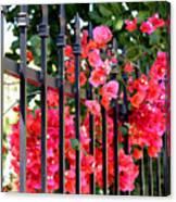Elegant Fence Canvas Print