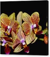 Elegant Orchid On Black Canvas Print