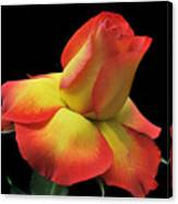 Elegant Rose. Canvas Print