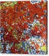 Elegant Sunburst Lichen Canvas Print